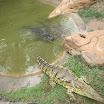 2012-12-11 14-23 Krokodyle w Zulu Croc.JPG