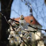 2015.04.12.,Klasztor wiosna, fot.s.Marcjanna Sz (15).JPG