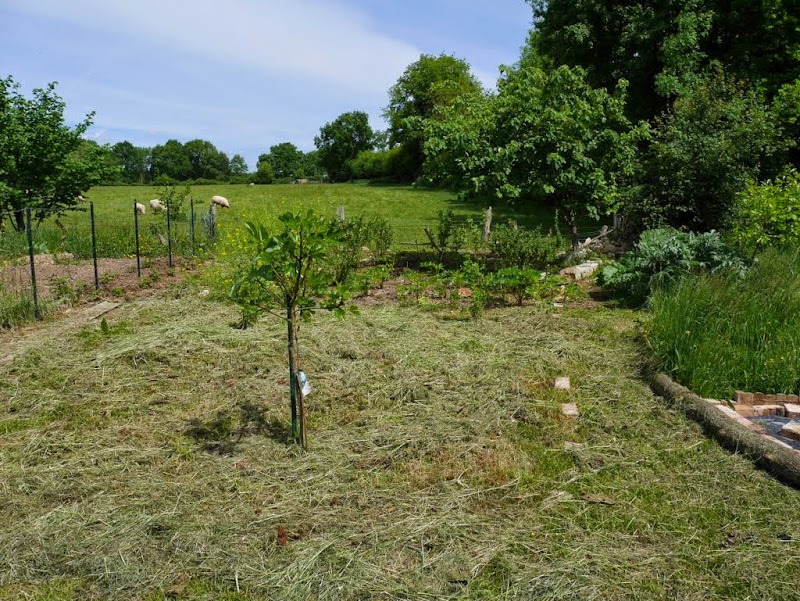 Un jardin en formation P1020927