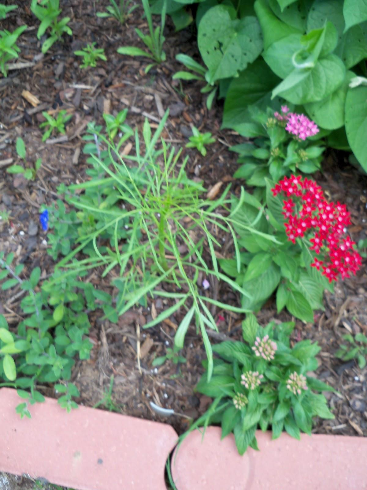 Gardening 2010, Part Two - 101_2665.JPG