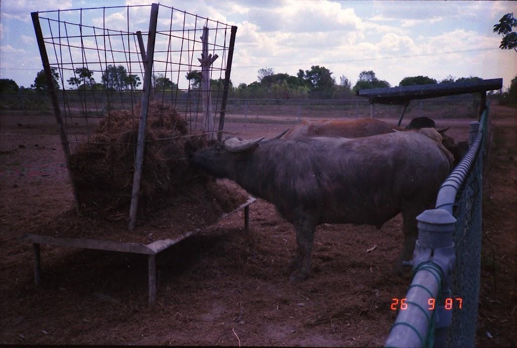 2090NT Croc Farm
