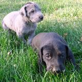 Serena & Jaspers 5-13-12 litter - SAM_3768.JPG