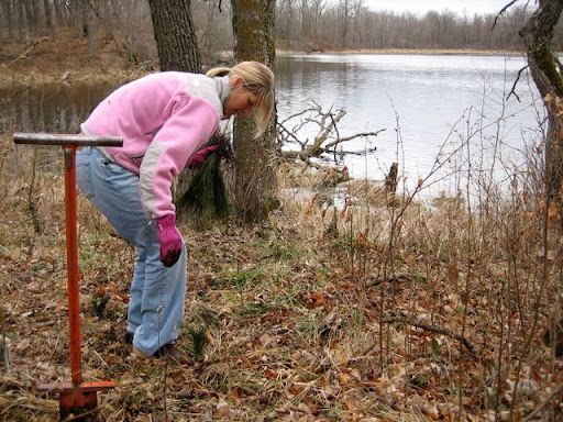 Jonell planting a seedling near the south end of south Twin lake.