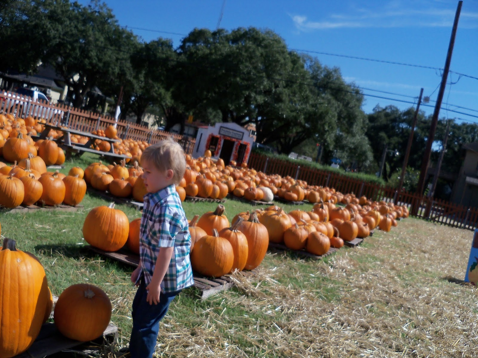 Pumpkin Patch 2015 - 100_0394.JPG