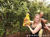 Turismo de experiência: Colher maçãs em Fraiburgo–SC
