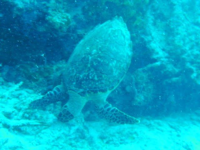 Bonaire 2011 - PICT0131.JPG