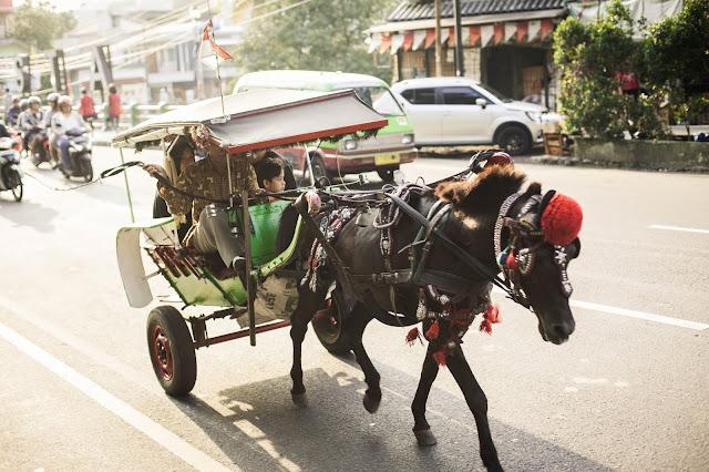 بعد قرار منع جولان العربات:مواطنون يتجولون على الأحصنة في المنستير (فيديو)