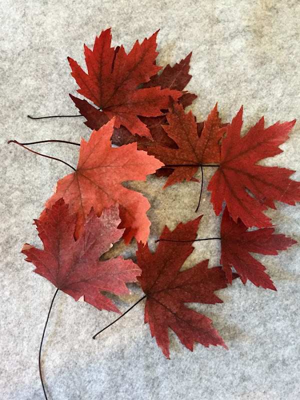Friday High Five - Pressed leaves via homework (2)