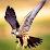 Hemant Prabhune's profile photo