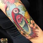 parrots tattoo eaec