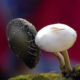 Mushroom  by Asif Bora - Nature Up Close Mushrooms & Fungi
