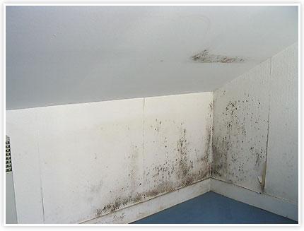 centre d 39 expertise en b timents du qu bec mars 2011. Black Bedroom Furniture Sets. Home Design Ideas
