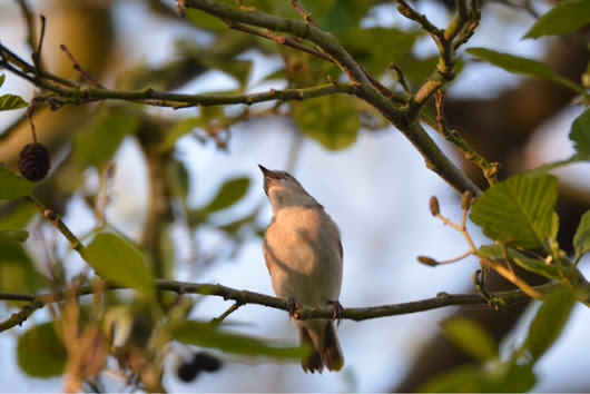 Dawn Chorus on the Levels May 2nd