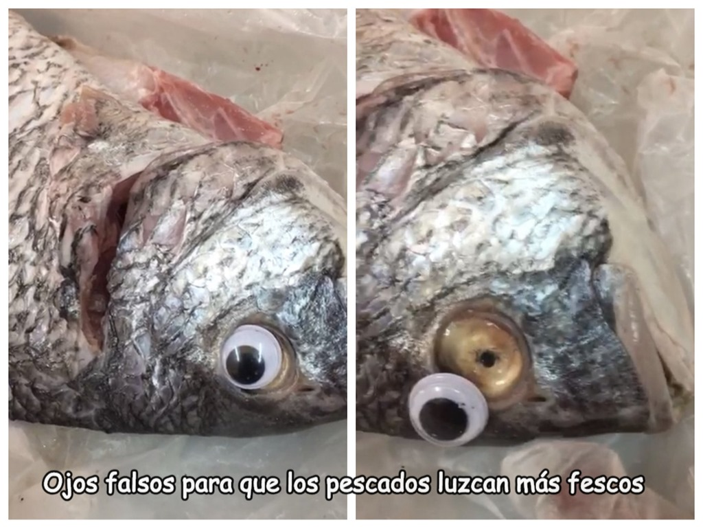 [cosasdivertidas+pescados+con+ojos+falsos+%5B2%5D]