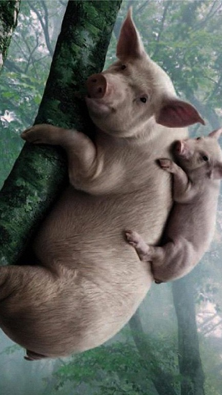 [pigs+in+trees%5B4%5D]