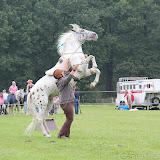 Paard & Erfgoed 2 sept. 2012 (17 van 139)