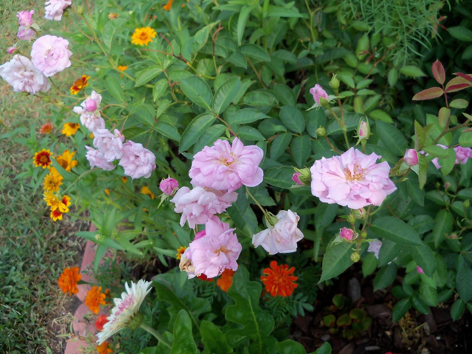 Gardening 2010, Part Two - 101_3266.JPG