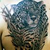 Leopard #1