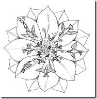 mandala-para-colorear-9[1]_thumb