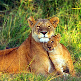 lioness-and-lion-cub.jpg