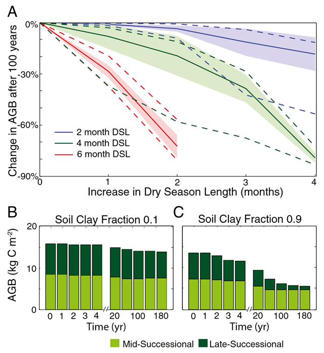 Predicted response of forest above ground biomass (AGB) and composition to an increase in dryseason length (DSL). (A) Change in AGB after 100 years as a result of increasing DSL for forests with historic DSLs of 2, 4, and 6 months for the range of soil textures simulated in the ensemble model simulations. The magnitude of the change in AGB is influenced by soil clay fraction: The mean (solid line), 1σ deviation (shaded region), and minimum and maximum values (dashed lines) are shown. Graphic: Levine, et al., 2015 / PNAS