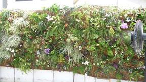 clôtures végétales, toits végétaux sur ST BARTHELEMY   PHOTO ; d un mur végétal en sphaigne pour un hôtel de GRAND LUXE à ST BART