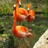 03-11-15 Dallas World Aquarium - _IMG1036.JPG