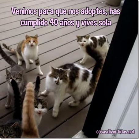 adoptes 3