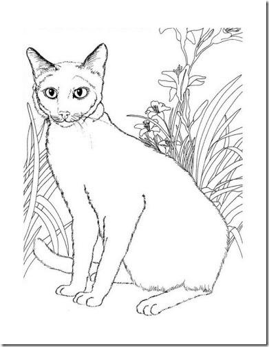 gatos colorear blogcolorear (7)