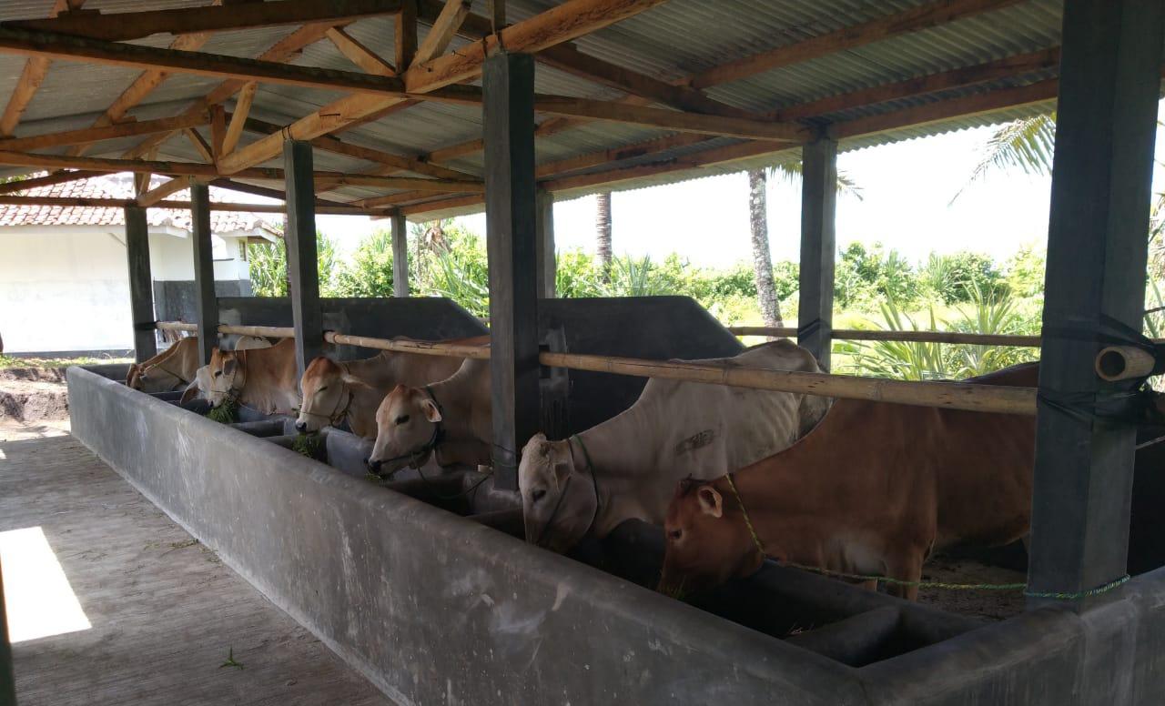Poktan Santani di Desa Tegalbuleud Terima Program UPPO