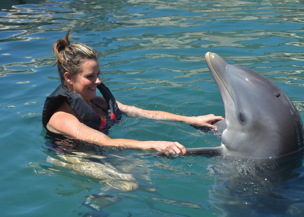 Dolphin Quest Photos BERMUDA Dolphin Dip id174018649 withBorder