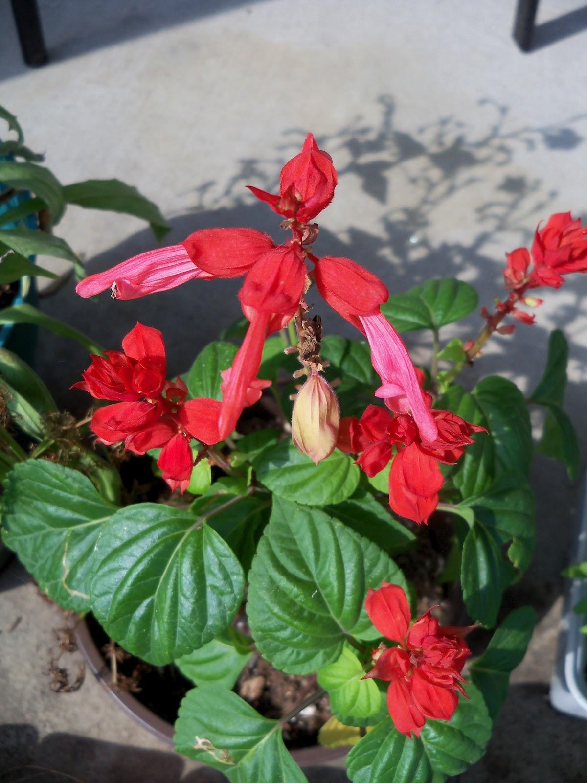Gardening 2012 - 115_2875.JPG