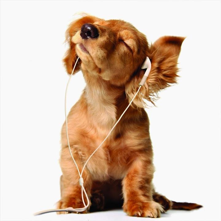 Music to My Ears!