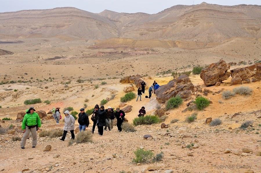 Мы недолго любовались окаменелыми деревьями. Пошел дождь и подул холодный ветер. Экскурсия гида Светланы Фиалковой в пустыню Негев.