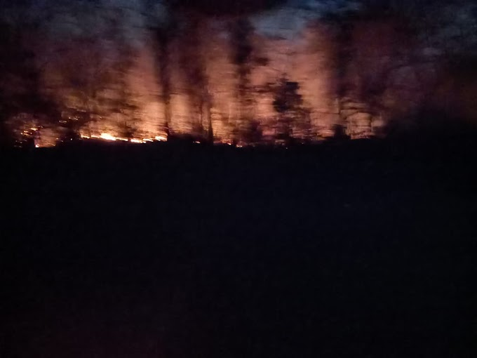 महुआ फूल चुनने तथा किमती पेड़ों की कटाई के लिए जंगलों में लगाई जा रही आग