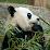 Think - Eat (PhilosopherPanda)'s profile photo