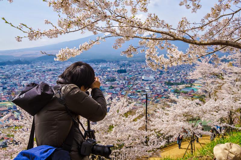 新倉富士浅間神社 桜 富士山 写真6
