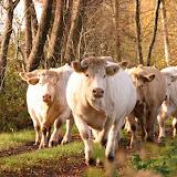 Dieren op en om de boerderij