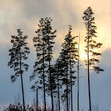 Холодное зимнее солнце на болоте Кемери