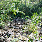 Affluent du Rio Coroico (au nord de Coroico à 1100 m d'alt., Yungas, Bolivie), 15 octobre 2012. Photo : C. Basset