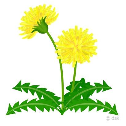 Dandelion-clipart1