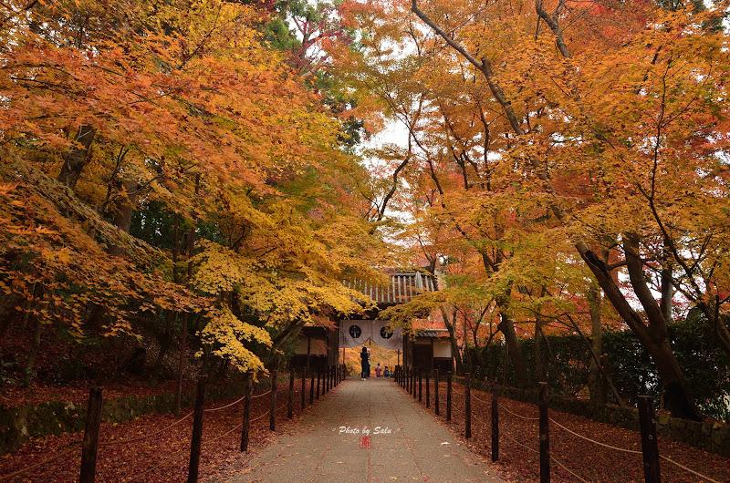 日本京都光明寺