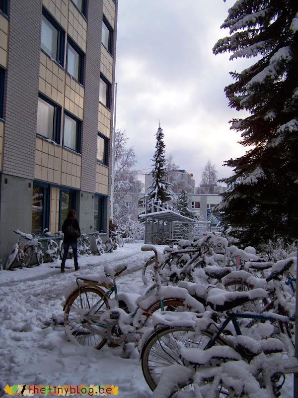 Jyväskylä University and Lapland Exchange Student
