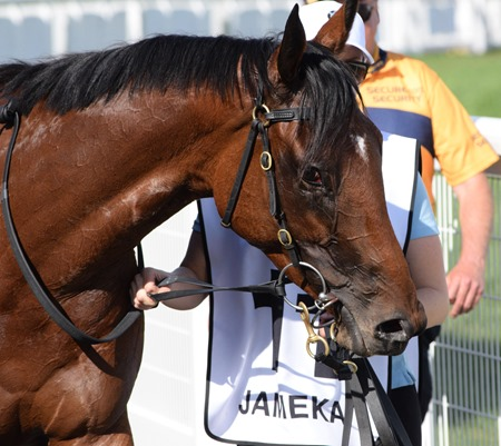 caulfield cup_jameka 9