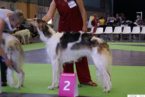 Renoma R -II Junior World Dog Show.jpg