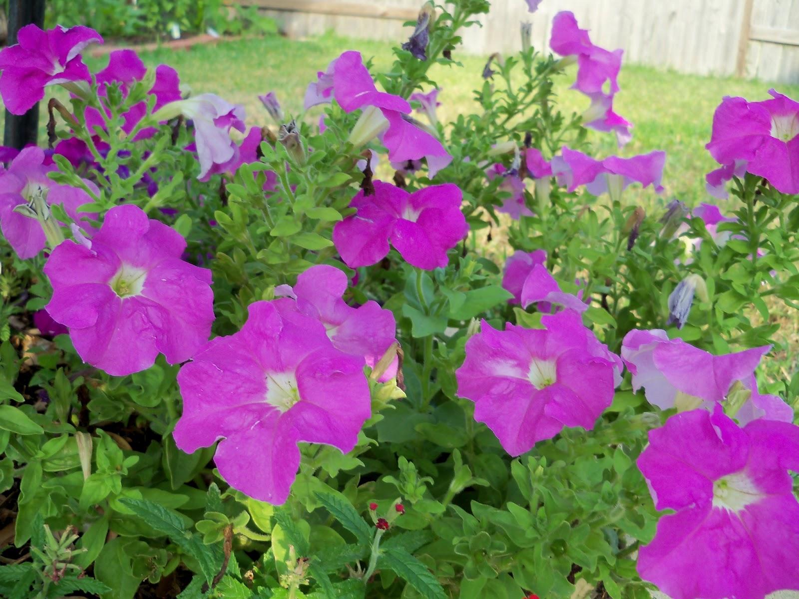Gardening 2011 - 100_8922.JPG