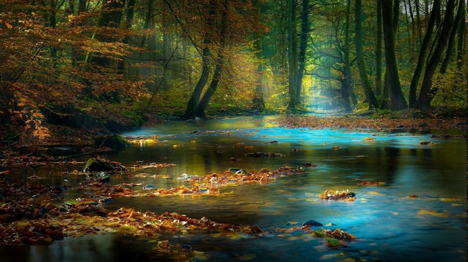 Stream of blue water in the magical forest
