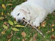 Arti Mimpi digigit Anjing dan Hikmahnya
