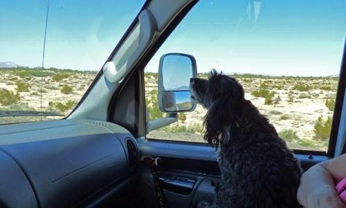Skruffy on Marcia's Lap, California Desert
