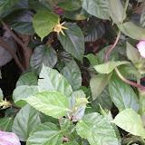 Gardening 2013 - IMG_20130526_103914.jpg